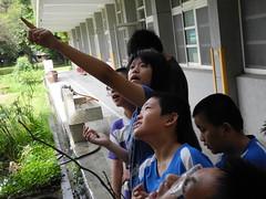 孩子們很容易就可以在樹上找到甲蟲的足跡。