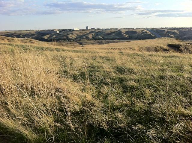 Prairie Grass at Magic Hour