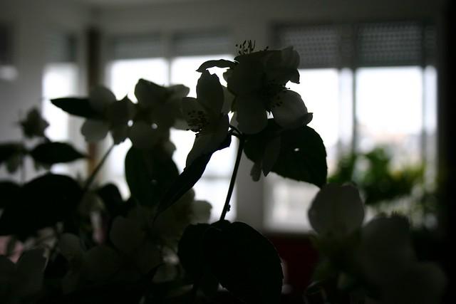 flores_29_20120517