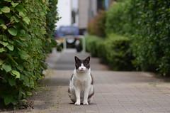 cats_2012-06-15_7