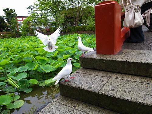 鶴岡八幡宮 #2