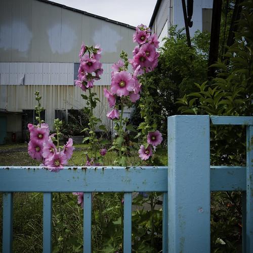 Industrial Flowerization Harmony, Urayasu
