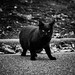 眼光 - Staring black cat -
