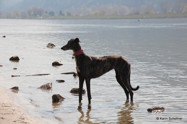 Donauinsel mit Martina und Finn,Mo,Shari - Maerz2014 142