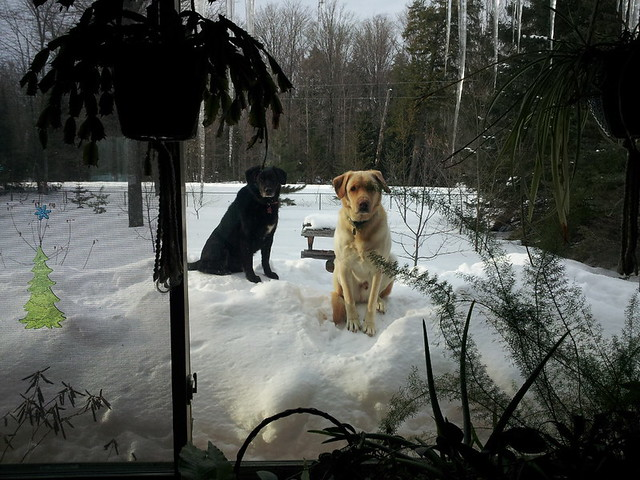 snowpile_dogs