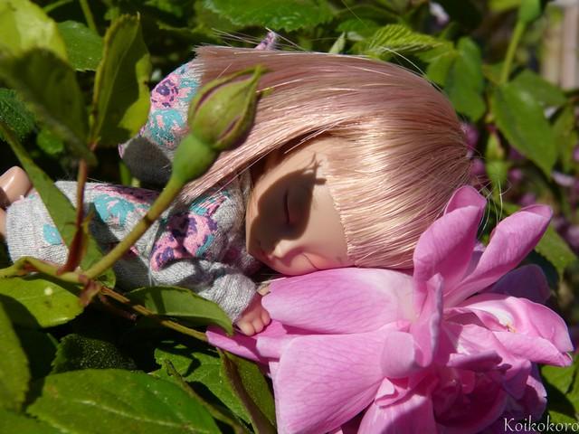 Dodo dans les roses