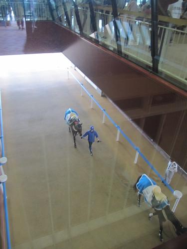 函館競馬場のホースヴィスタ