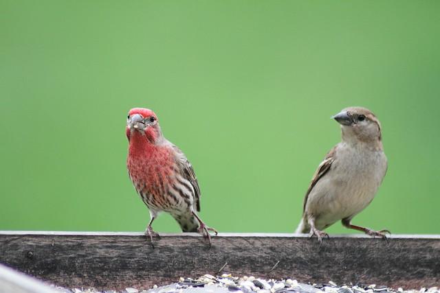 backyard birds flickr photo sharing