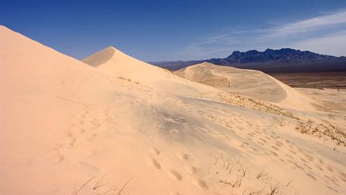 Kelso Dunes 06