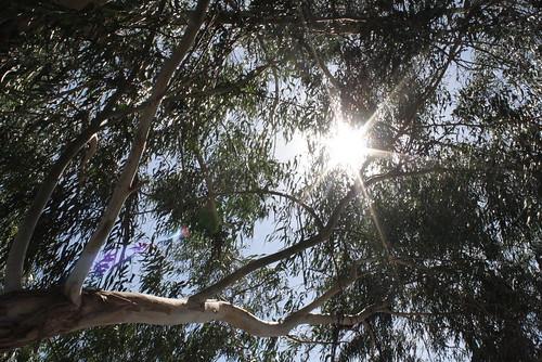 el sol del medio día by anitalovileto