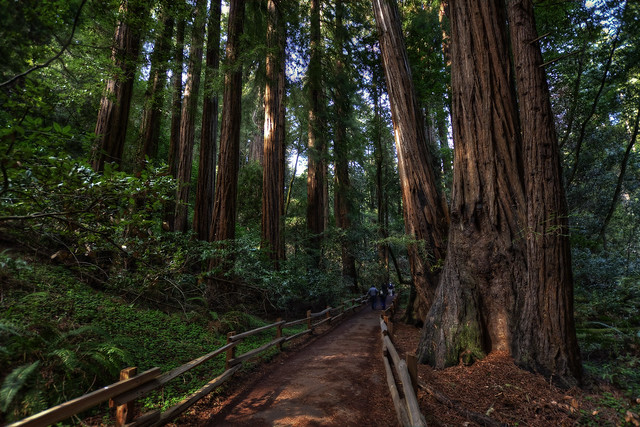 Muir Woods Forest Light Flickr Sharing