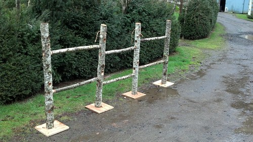 birch fence