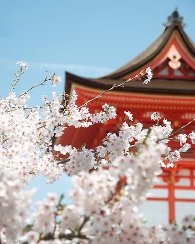 仁王門と桜 - 清水寺 / Deva Gate - Kiyomizudera by Active-U