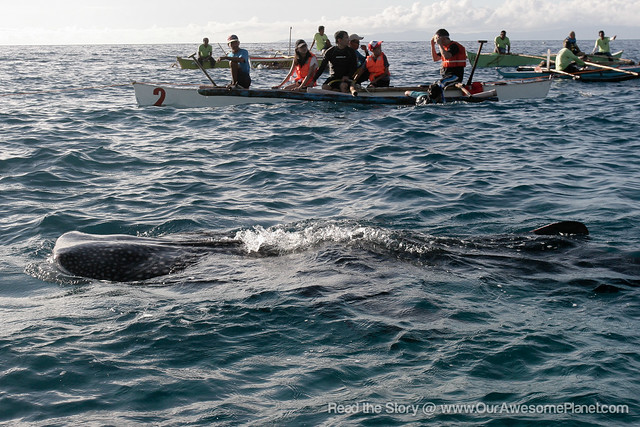 Oslob Whale Watching-13.jpg