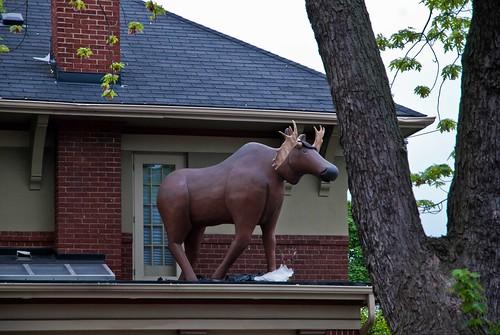 365-34: Roof Moose