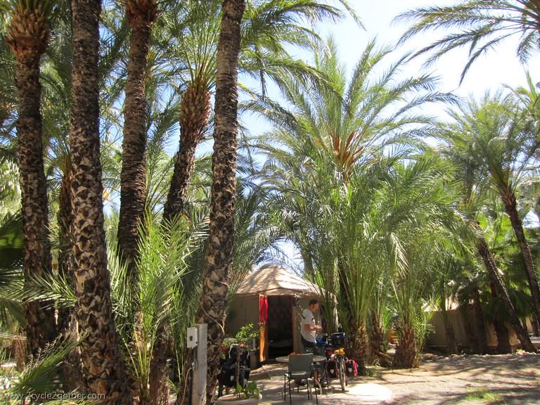 Date Palms, San Ignacio