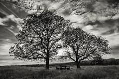 [フリー画像素材] 自然風景, 樹木, 風景 - ドイツ, モノクロ ID:201205180400
