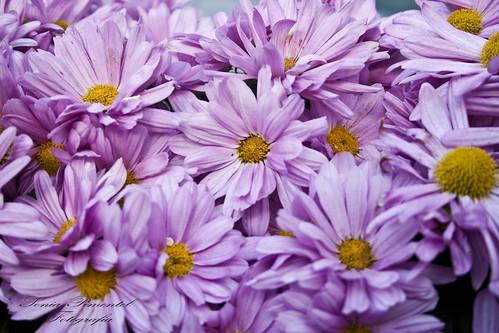 palacio viana,cordoba,fotografia,flor