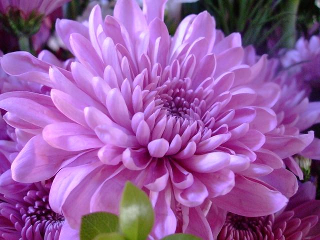Just love the colour...., Fujifilm FinePix V10