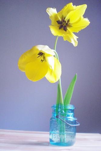 tulip2 023
