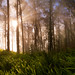 Morning Mist by Simon Christen - iseemooi