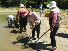部落居民於生態池種植水生植物(提供者:陳美惠)