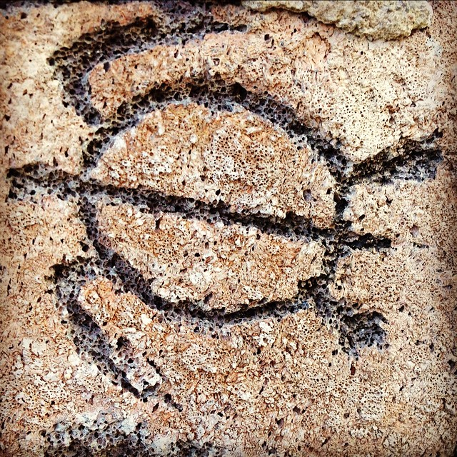 Hawaiian Turtle Petroglyphs