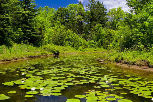 "Schlitz Audubon Nature Center ""Mystery Lake"" by Ricky L. Jones Photography"