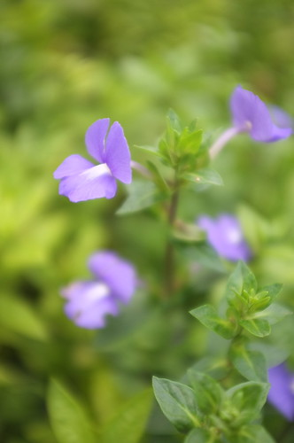 at healing garden - botanic gardens