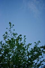 spring tree 4