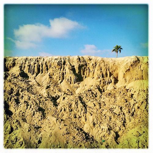 Line Palm