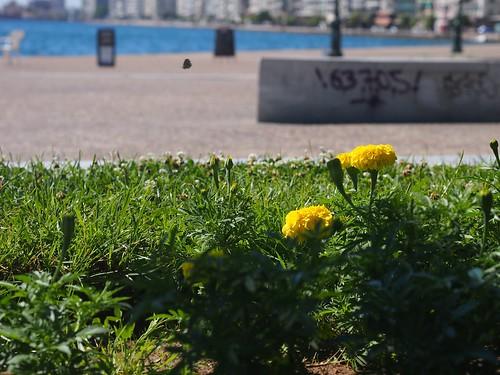 Thessaloniki-39