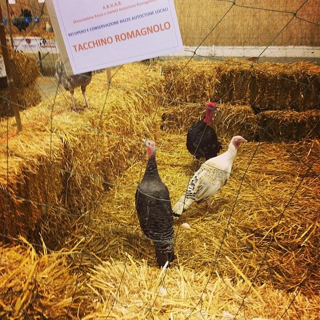 Biren #hobbyfarmer #cesena #sabatodelvillaggio