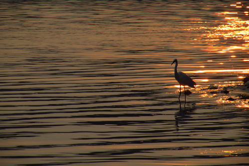 sunset lake bird water colors gold golden ripples catchy quilon ashtamudi sanandkarun sanandkarunakaran aashramam