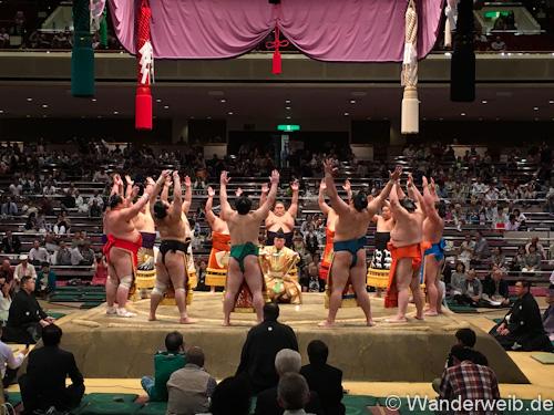 sumo (35 von 53)