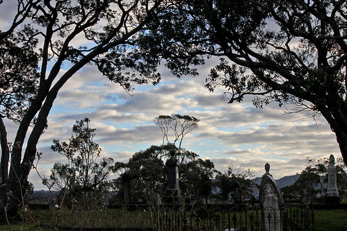 through the cemetery trees