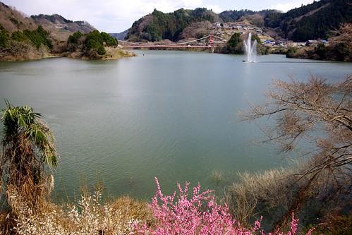 (4)月ヶ瀬梅林名張川