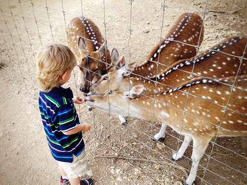 Jude Feeding Deer