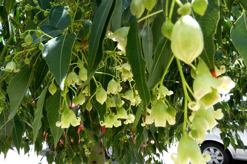 13-04-2012-hanging-bells