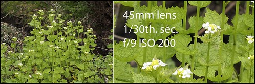 OLYMPUS OM-D EM-5 45mm f/1.8 lens