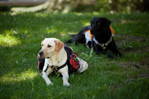 Adventure Dog Workshop Aspen