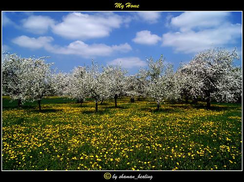 landscape bayern bavaria spring dandelion landschaft frühling löwenzahn fränkischeschweiz franconianswitzerland apfelblüten pinzberg landschaftsfoto mygearandme