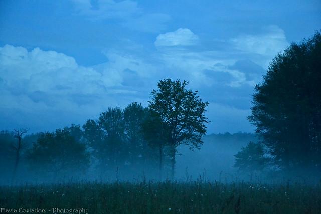 Flickr le jardin des hesp rides - Le jardin des hesperides ...