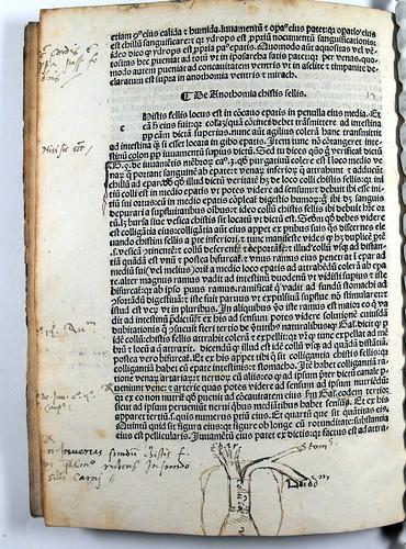 Manuscript anatomical diagram in Mundinus: Anatomia
