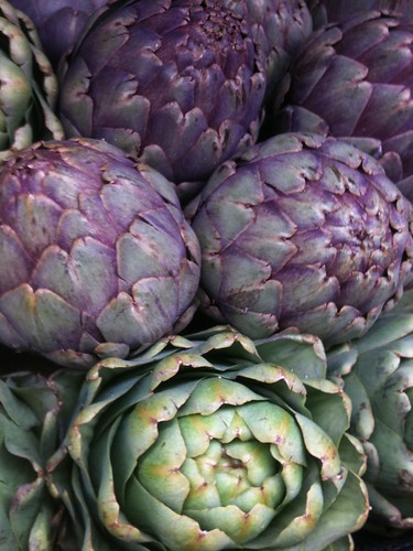 Pic of the day - Opening of Artichokes