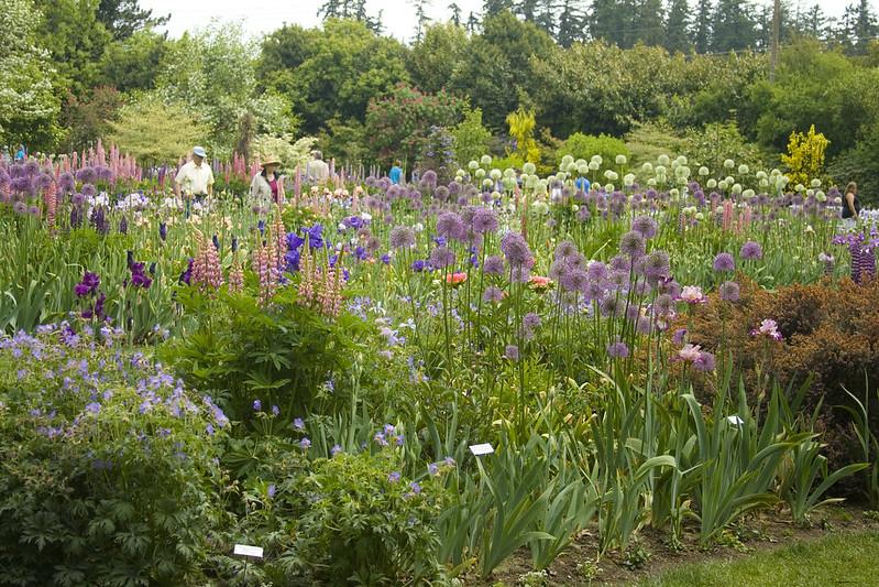 Rhone Street Gardens Schreiner 39 S Iris Garden