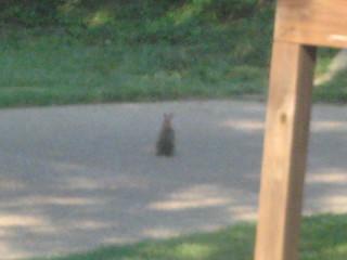 bunny in neighbor's yard