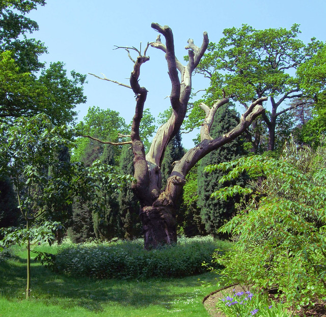 A gnarly tree in kew gardens london flickr photo for Garden trees london