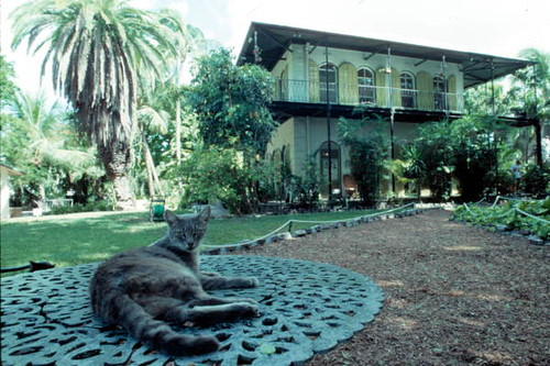 Cat relaxing in front of the Hemingway House: Key West, Florida by State Library and Archives of Florida