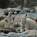 Malik, Milak und Augo im Zoo Aalborg